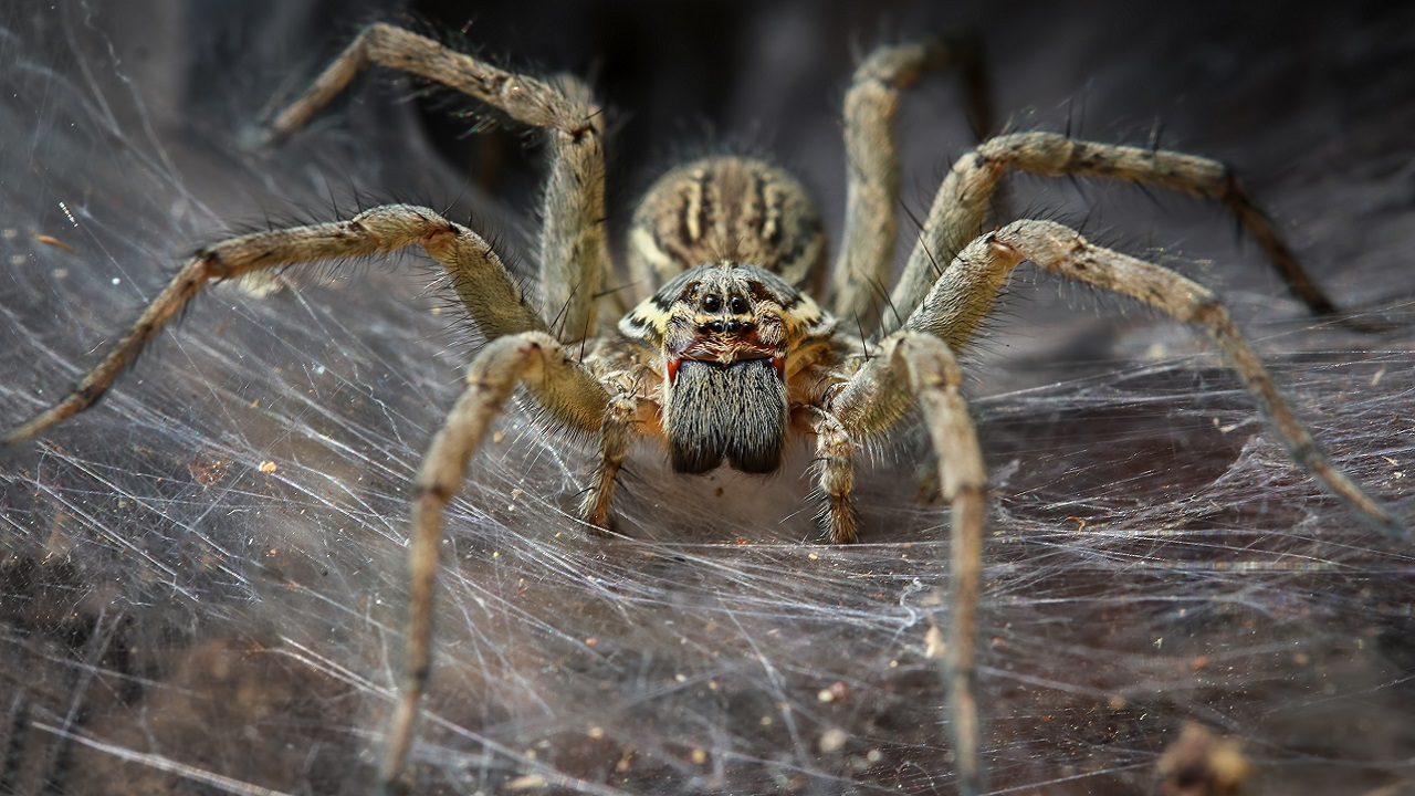 Science Makes Super-Strong Spider Silk Because Spiders Aren\'t ...
