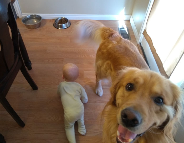 dad bases cute comic series on baby son and family dog