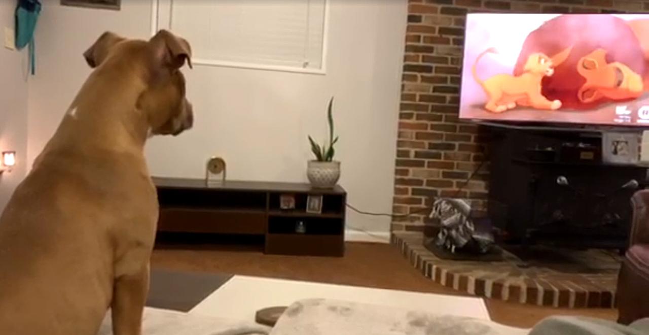 Dog Cries When Mufasa Dies
