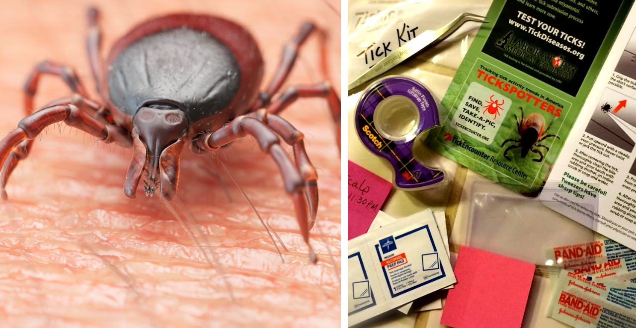 Make a Tick Kit