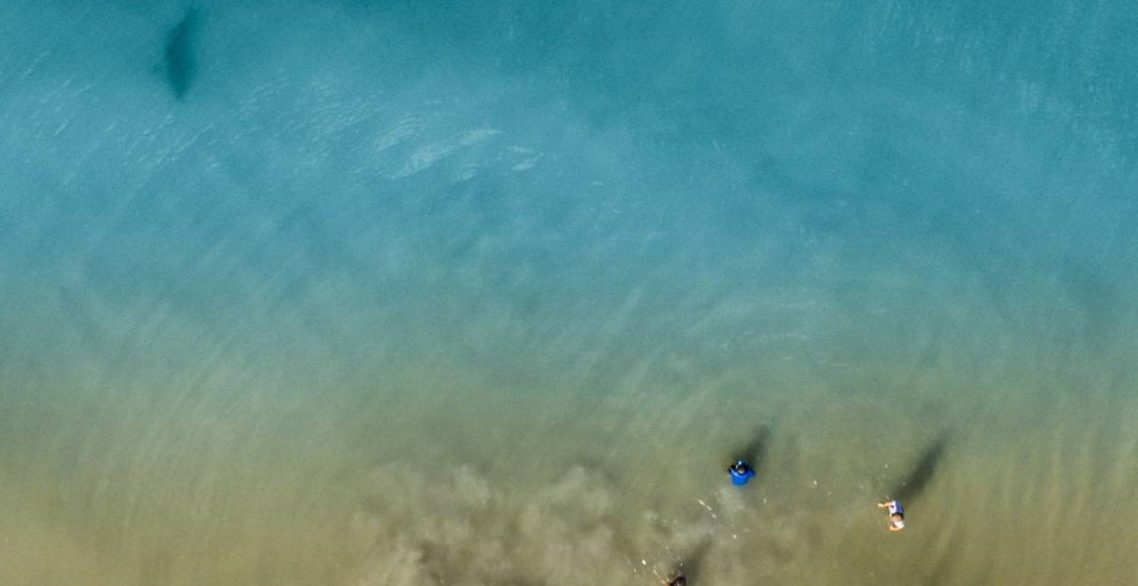 Dad's Drone Detects Shark