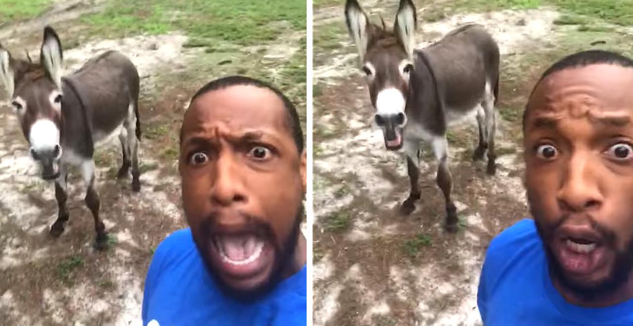 Travis Kinley's Donkey Duet