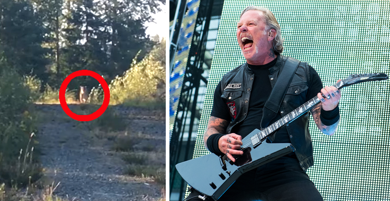 Metallica Scares off Stalking Cougar
