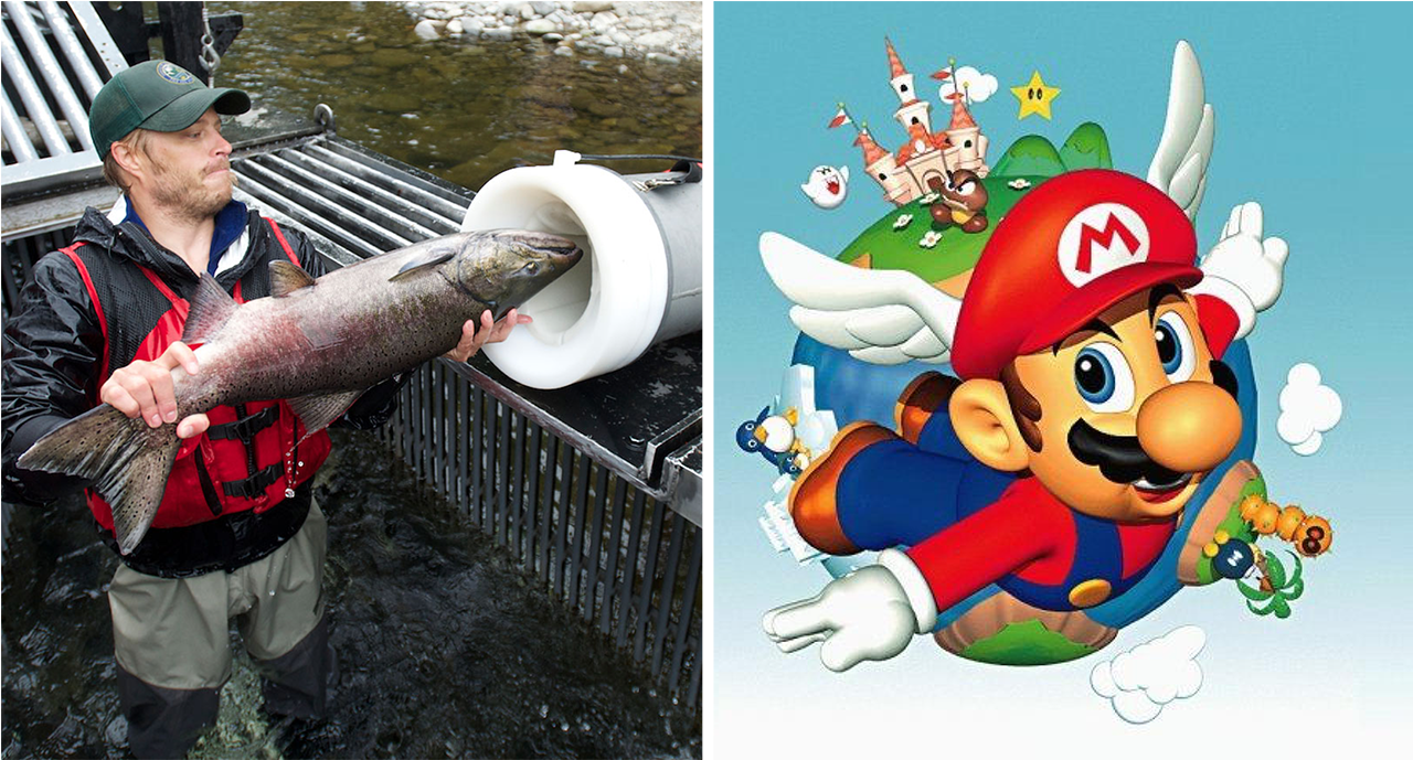 Salmon Cannon With Mario Sounds