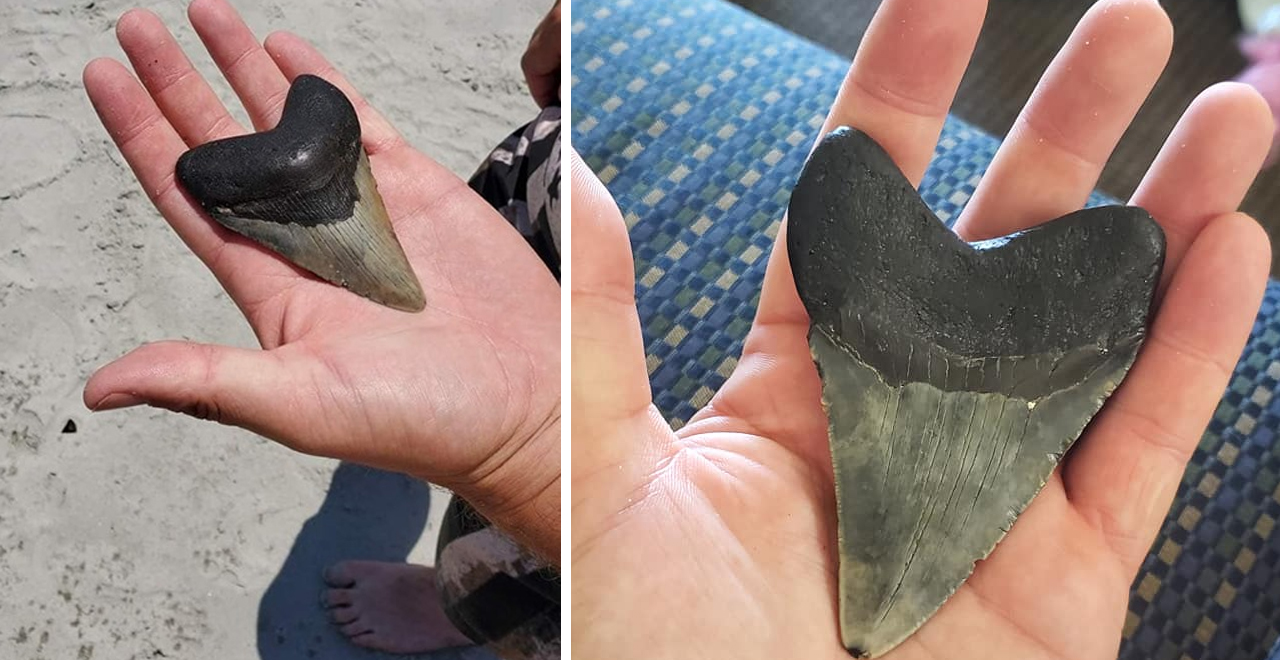 Dad and Son Find Meg Tooth on Myrtle Beach