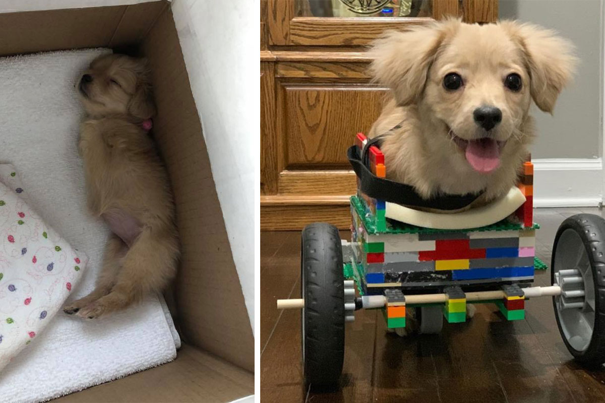 12yo Constructs LEGO Wheelchair for Puppy
