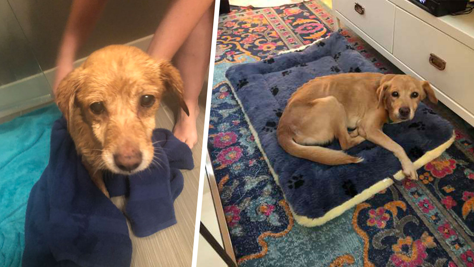 stray dog finds forever home