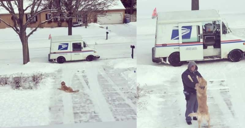 Moose Hugs Mailman