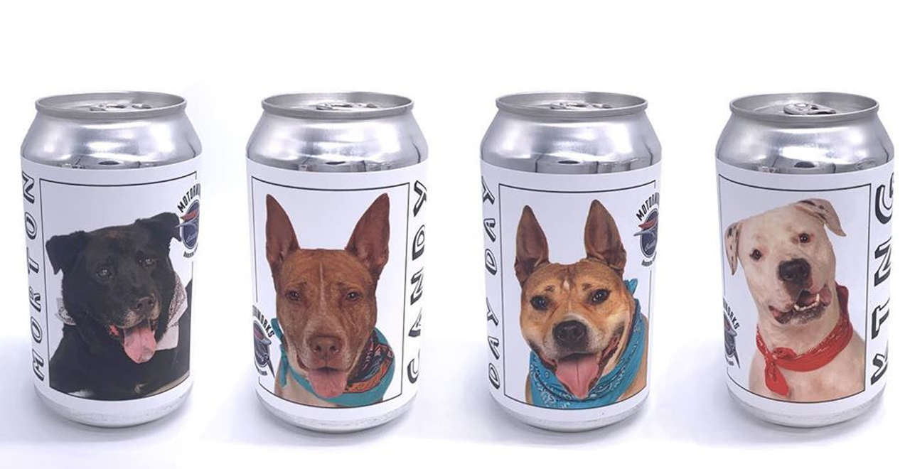 Dog on Beer Can Reunited With Owner