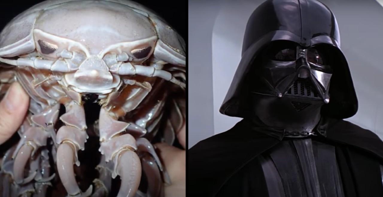 Vader Sea Cockroach