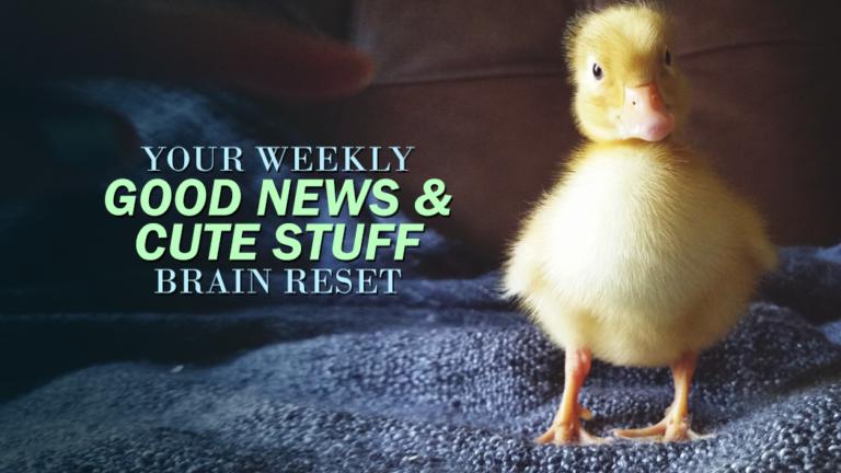 Your Weekly Good News & Cute Stuff Brain Reset: Vol. 3