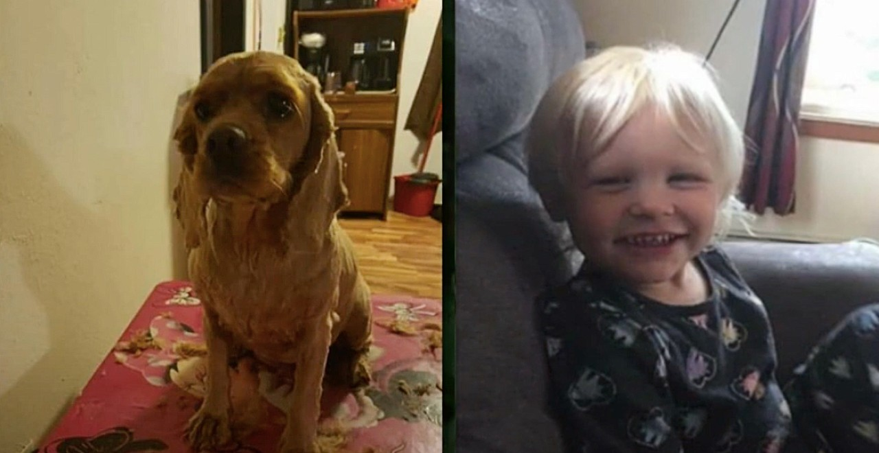 Missing 3-year-old found with dog