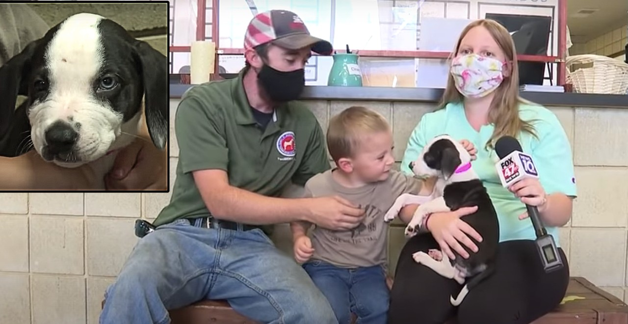 2-Year-Old With Cleft Lip Adopts Puppy with Cleft Lip