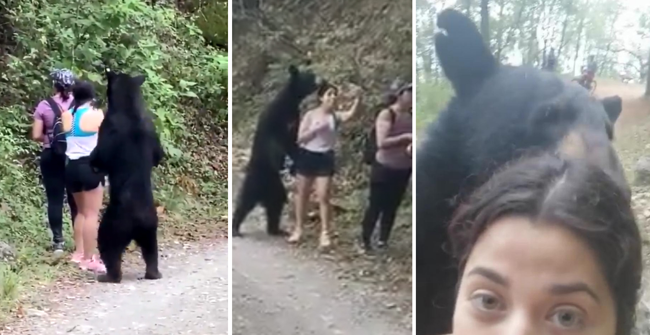 Woman Takes Selfie with Bear