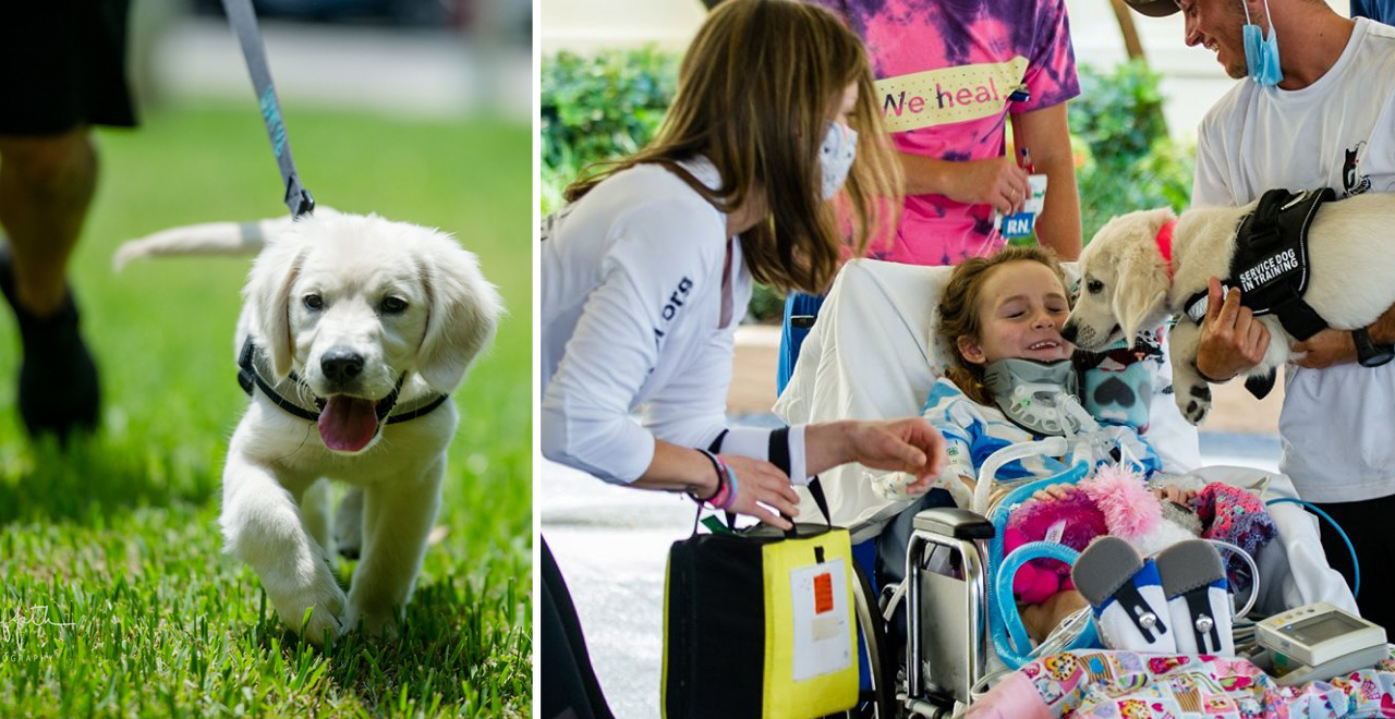 Paralyzed Girl Meets Future Service Dog
