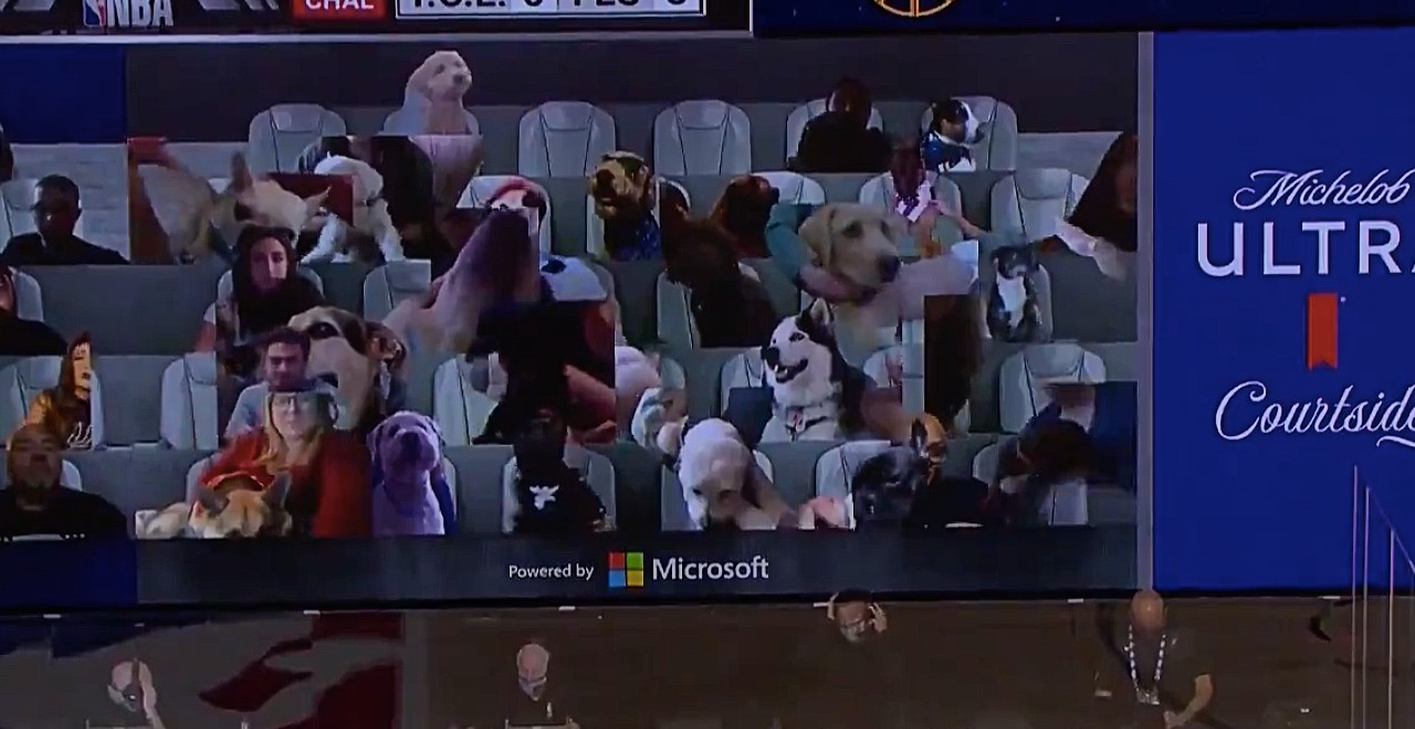 Adoptable animals courtside NBA