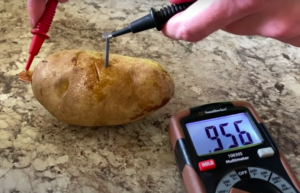 Potato Doom