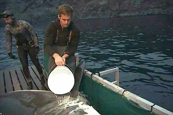 Paul Walker as a crew member on Shark Men