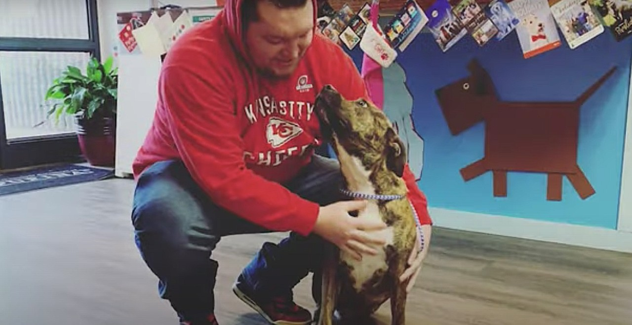 Lost 3-legged dog reunites with owner