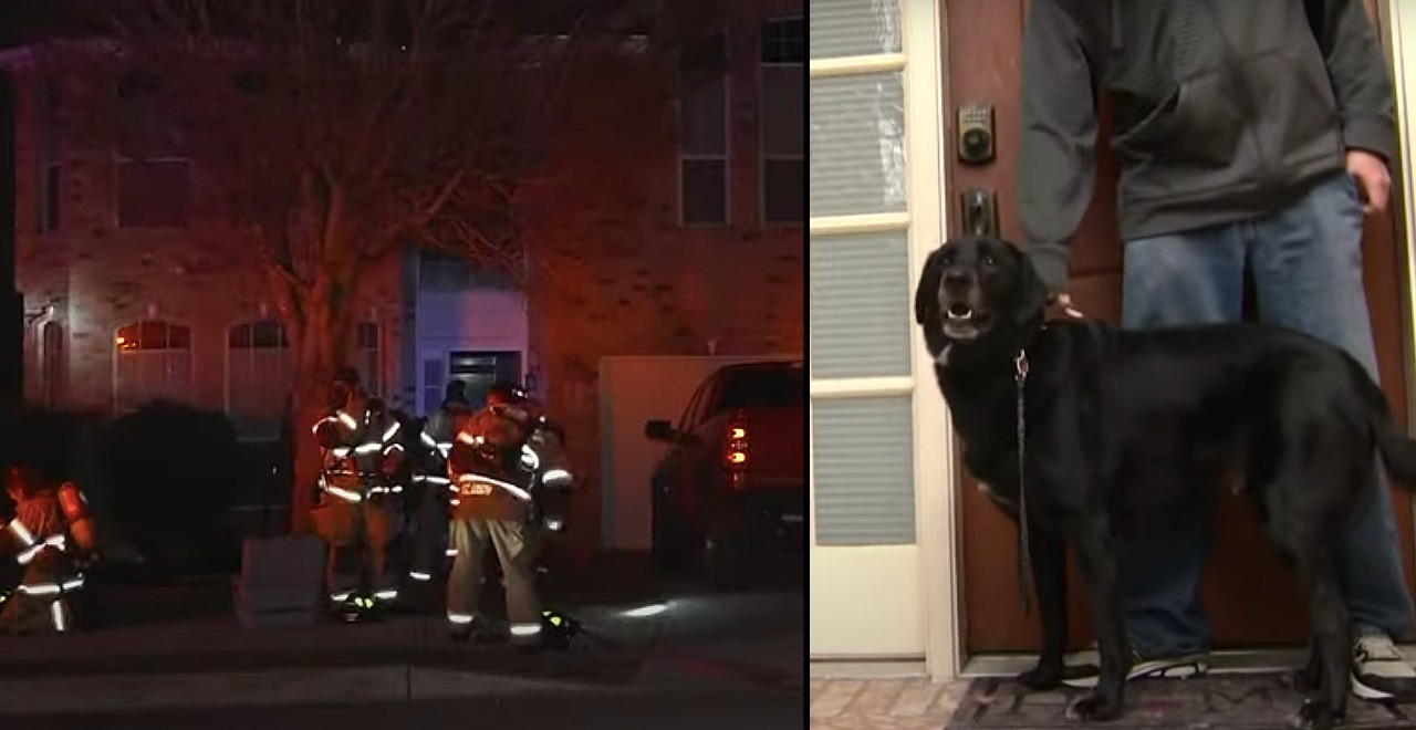 Dog named Captain America wakes family during fire
