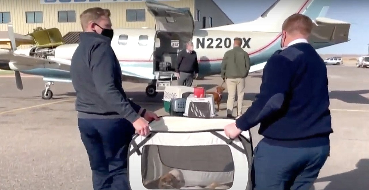 17-Year-old flies shelter animals to safety