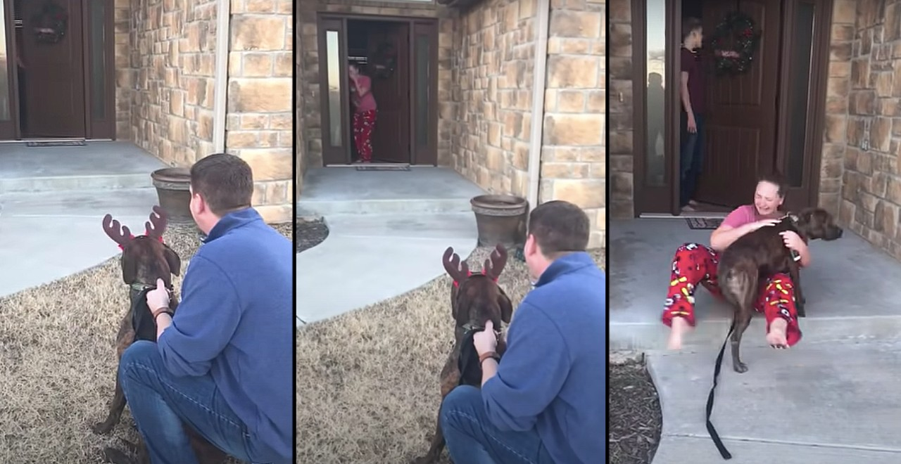 Parents surprise daughter with dog she cared for at shelter