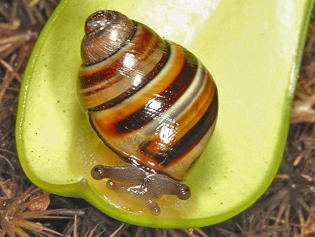 the Crikey steveirwini snail, which, you guessed it, was named after Steve Irwin.