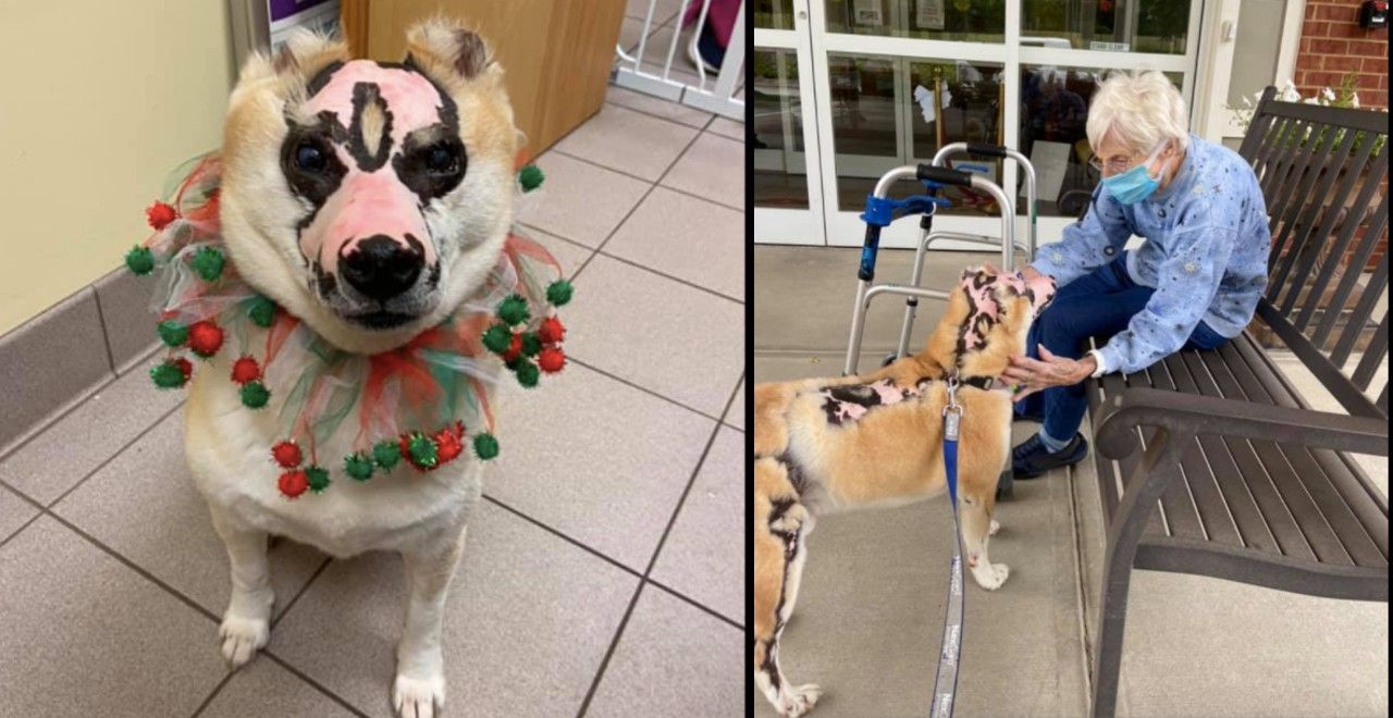Dog inured in fire becomes therapy dog for burn victims