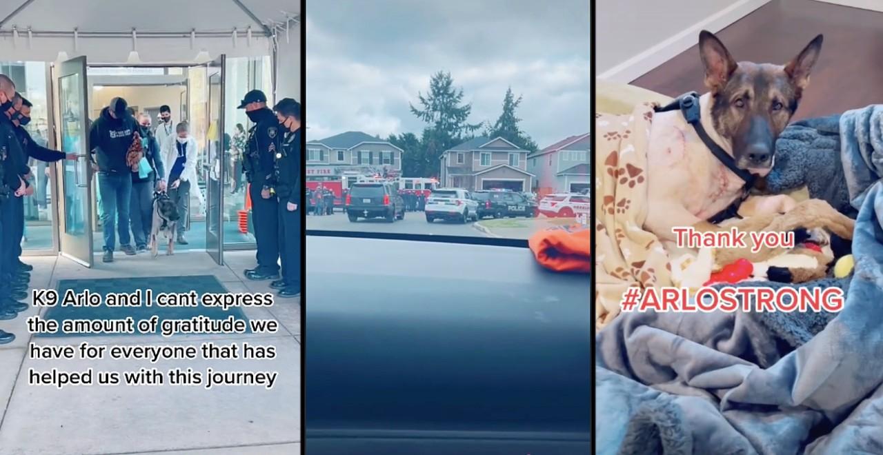 Arlo Police dog gets hero's welcome leaving hospital