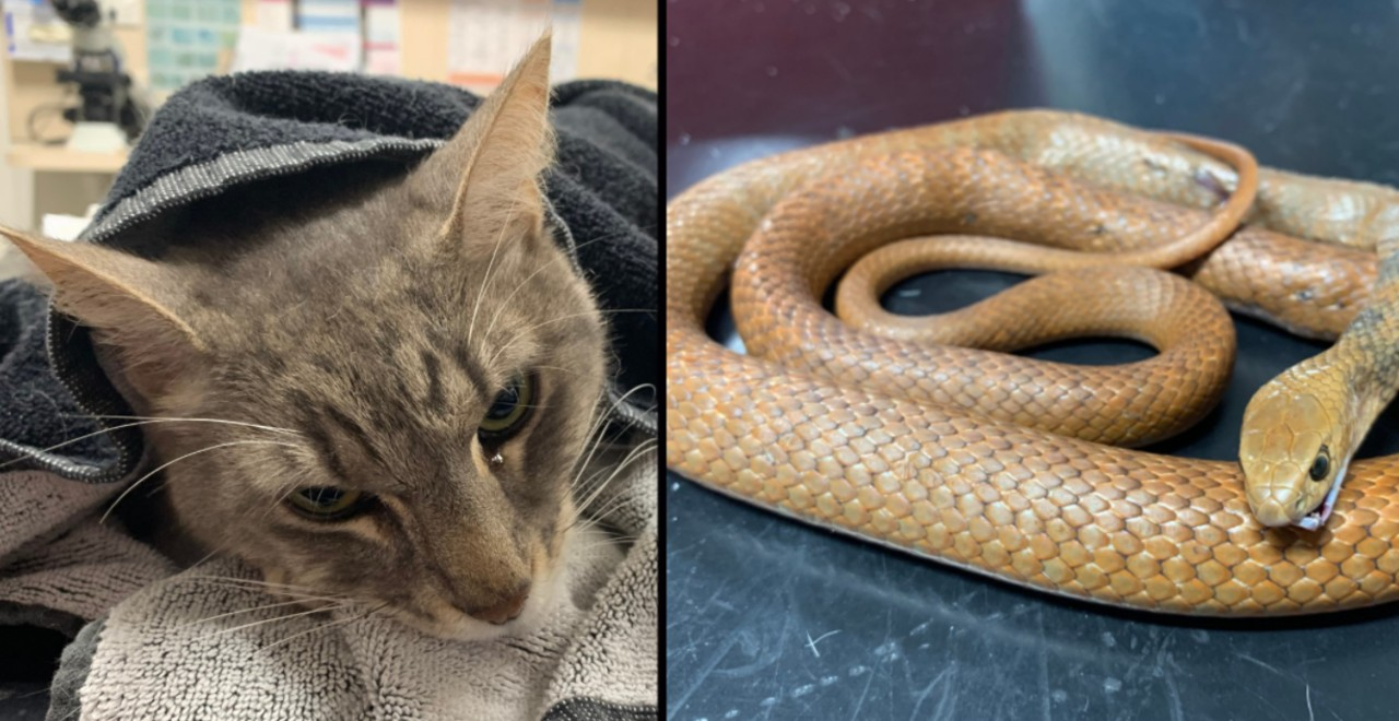 Hero cat saves kids from deadly snake