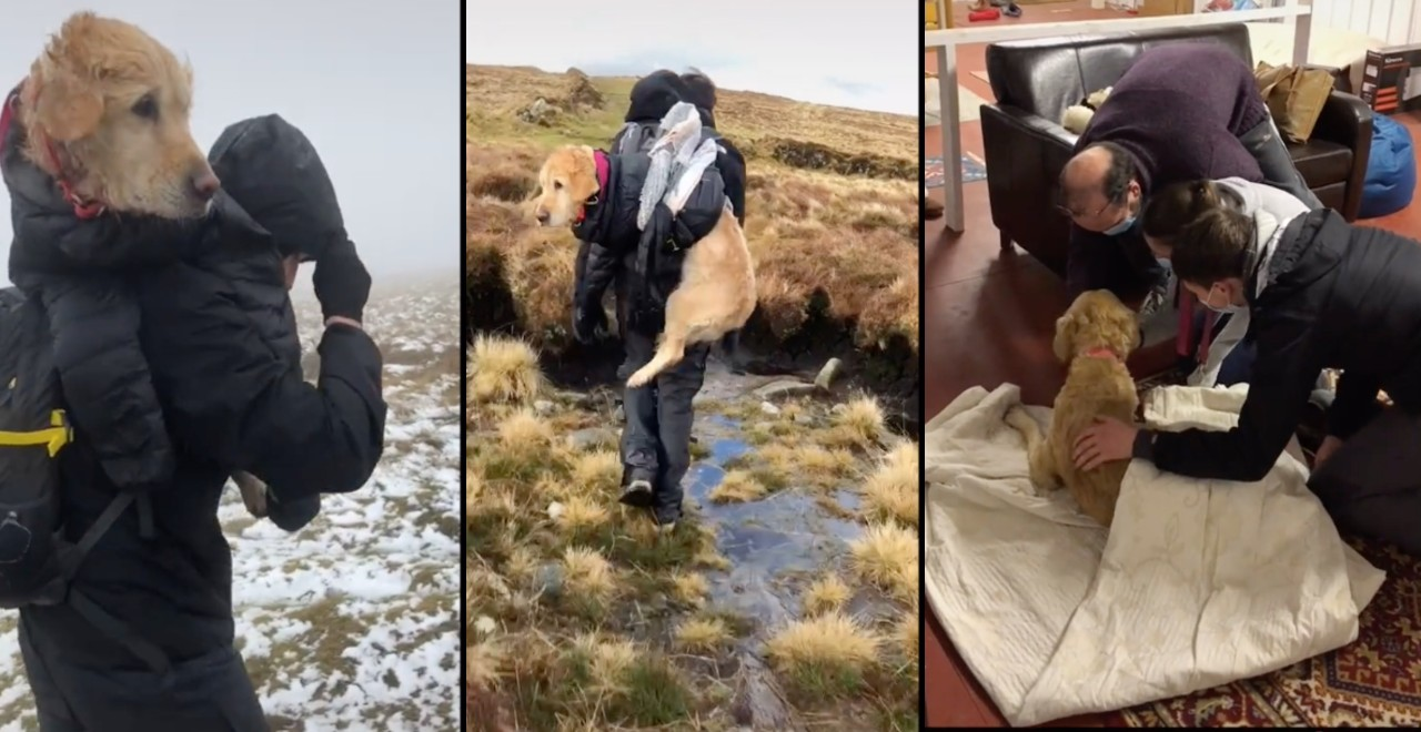 Dog rescued by hikers