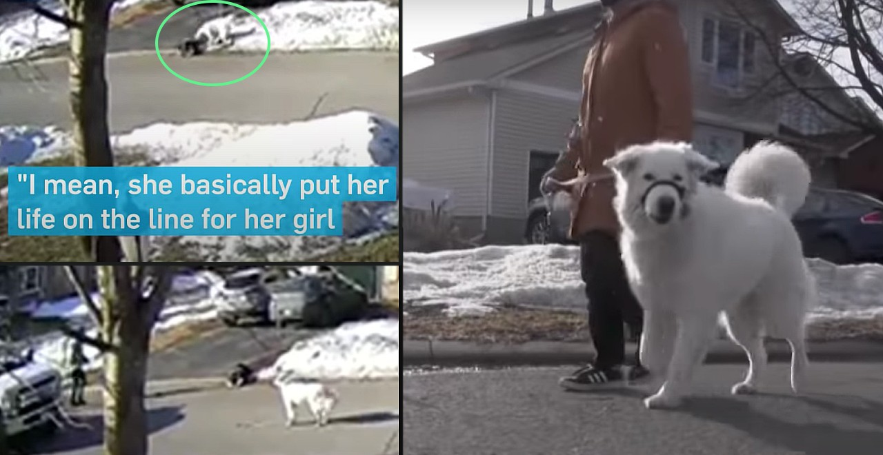 Dog stops traffic to get help after owner has seizure