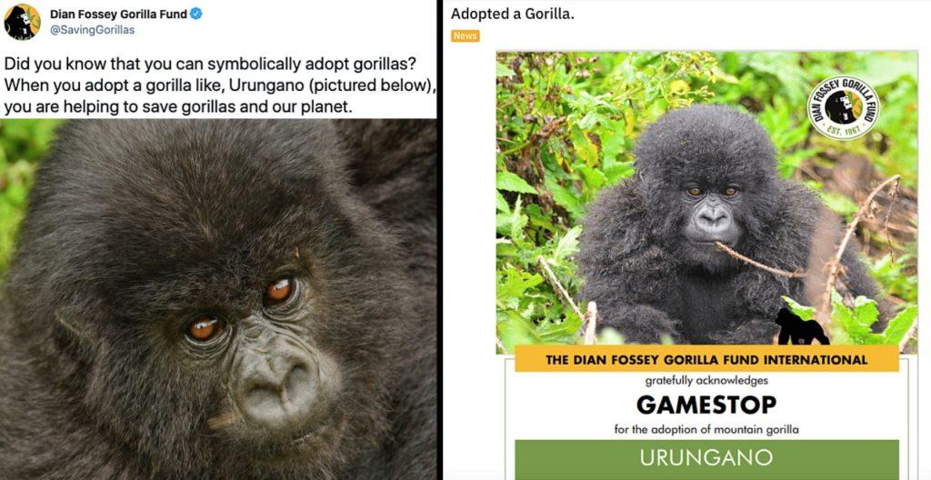 WallStreetBets donates to save gorillas