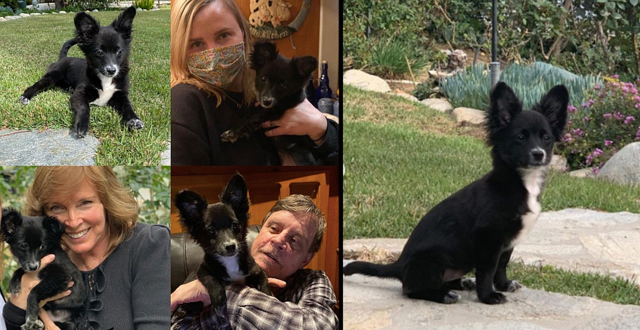 Hamill Family welcomes new rescue dog