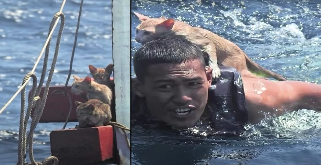 Thai navy rescues four kittens from burning boat