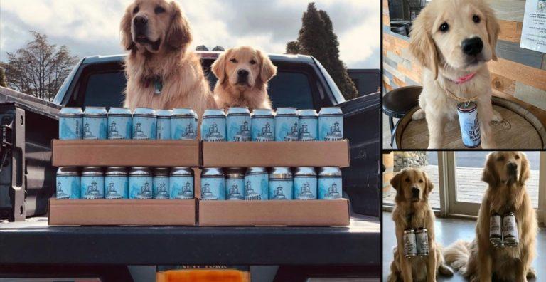 Brew dogs help deliver beer