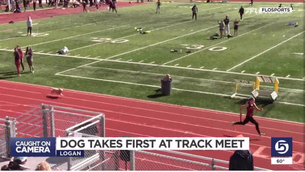 Dog Wins Track Meet