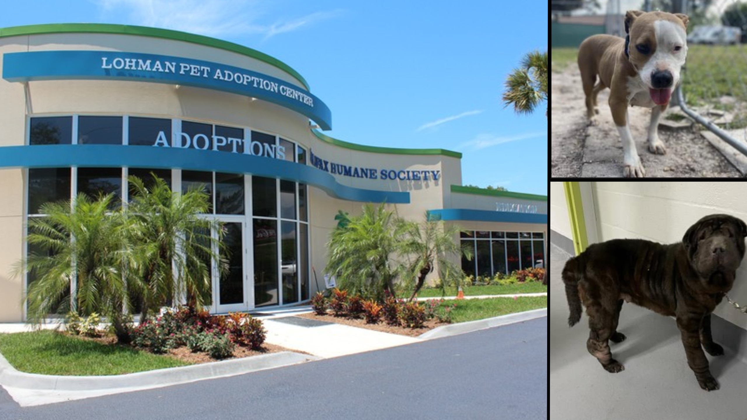 Donor uses dogecoin earnings to pay animal shelter adoption fees