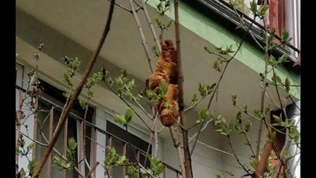 Tree Pastry Beast