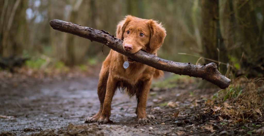 cool dog tricks, dog with stick in mouth