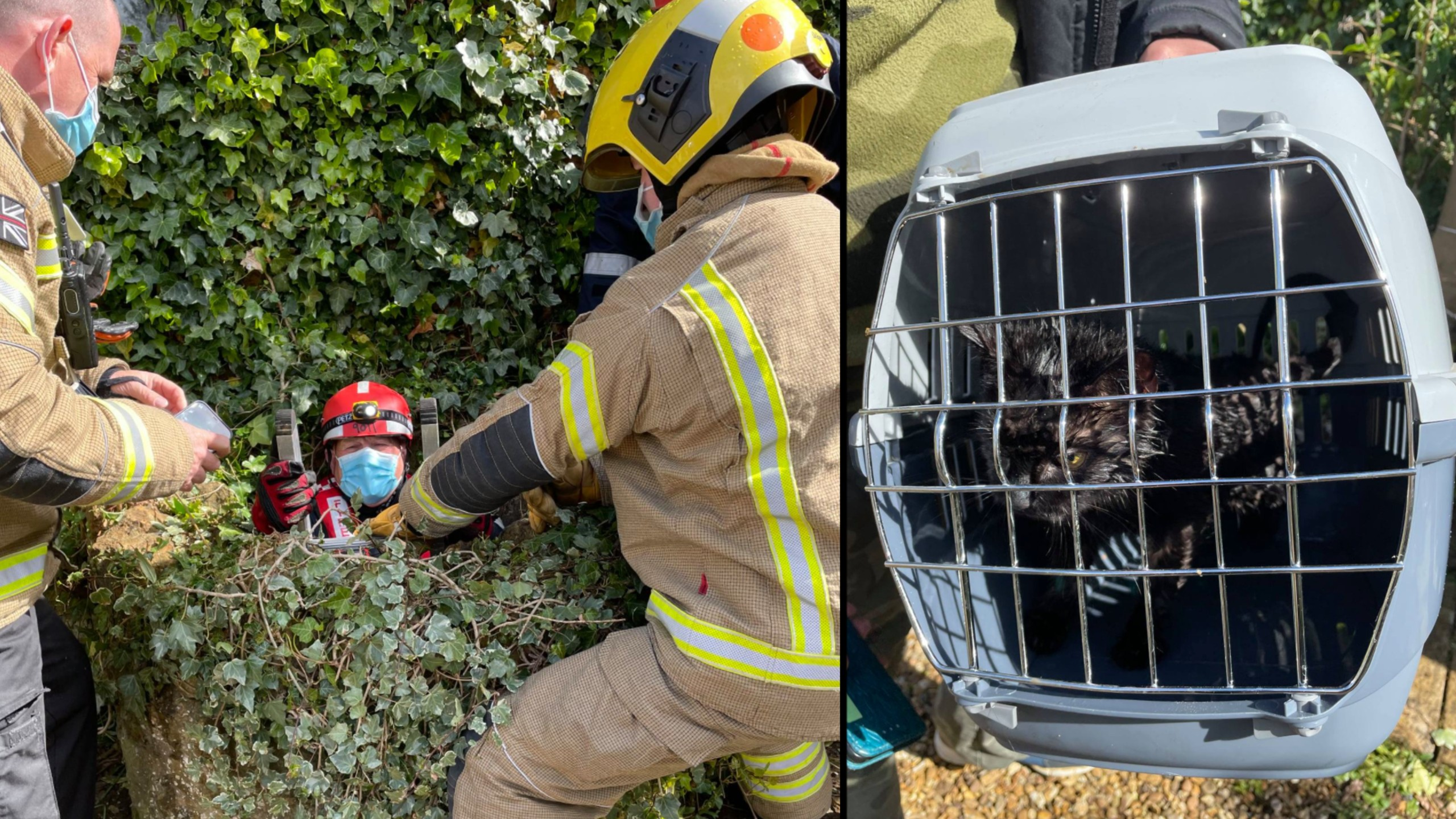 Dog alerts homeowner to cat trapped in well