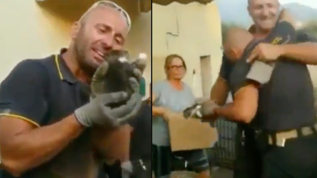 Italian firefighter emotional after rescuing kitten from hole