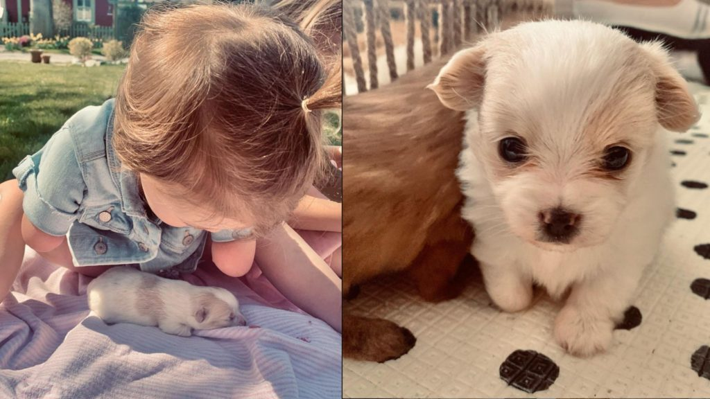 2-year-old without hands adopts puppy without paw