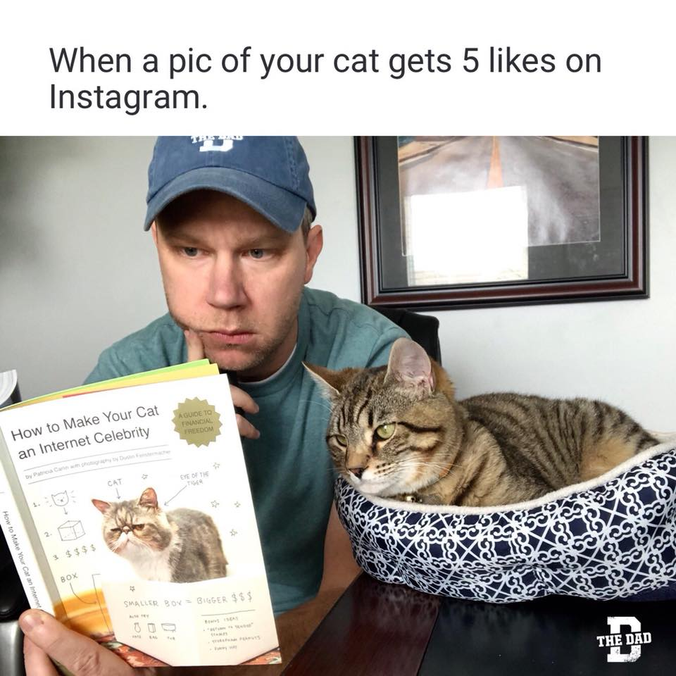"""When a pic of your cat gets 5 likes on Instagram. """"How to make your cat an internet celebrity"""" Joel Willis reading his cat that book."""