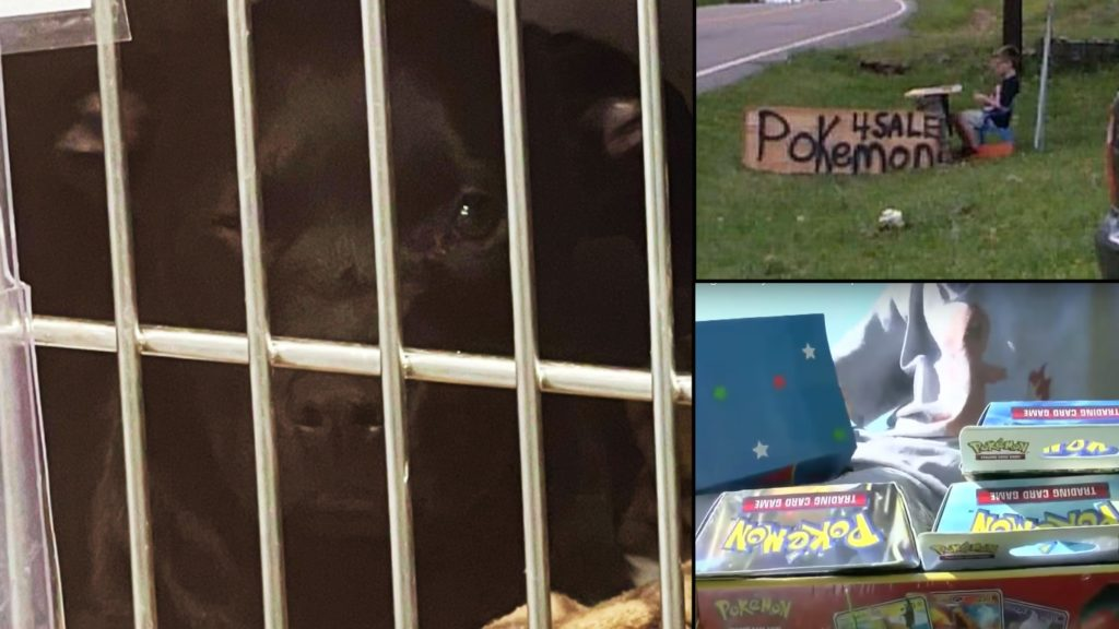 Pokemon rewards boy who sold his cards to help his puppy