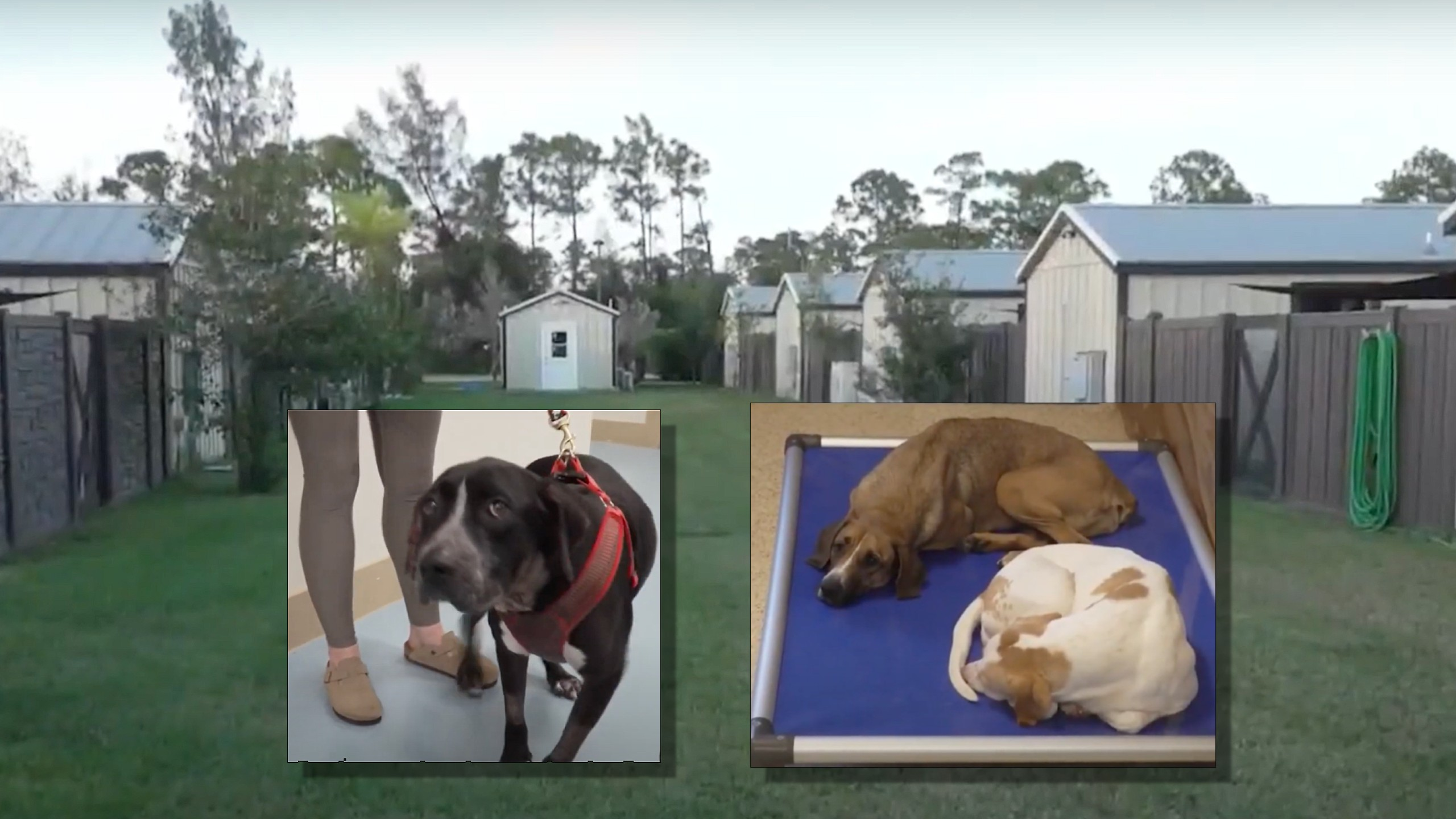 Big Dog Ranch Rescue gives dogs a second chance
