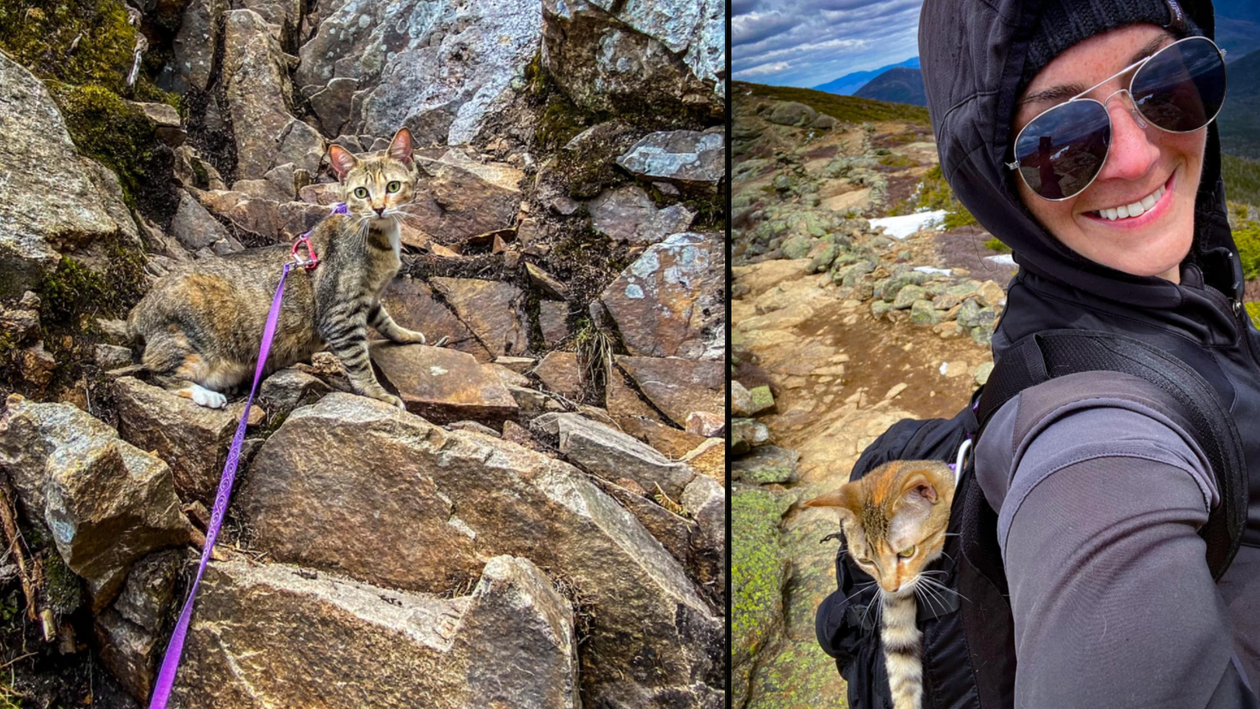 Rescue cat and her owner climb New Hampshire's 48 tallest mountains