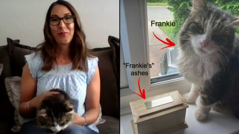 Family shocked when cremated cat returns home