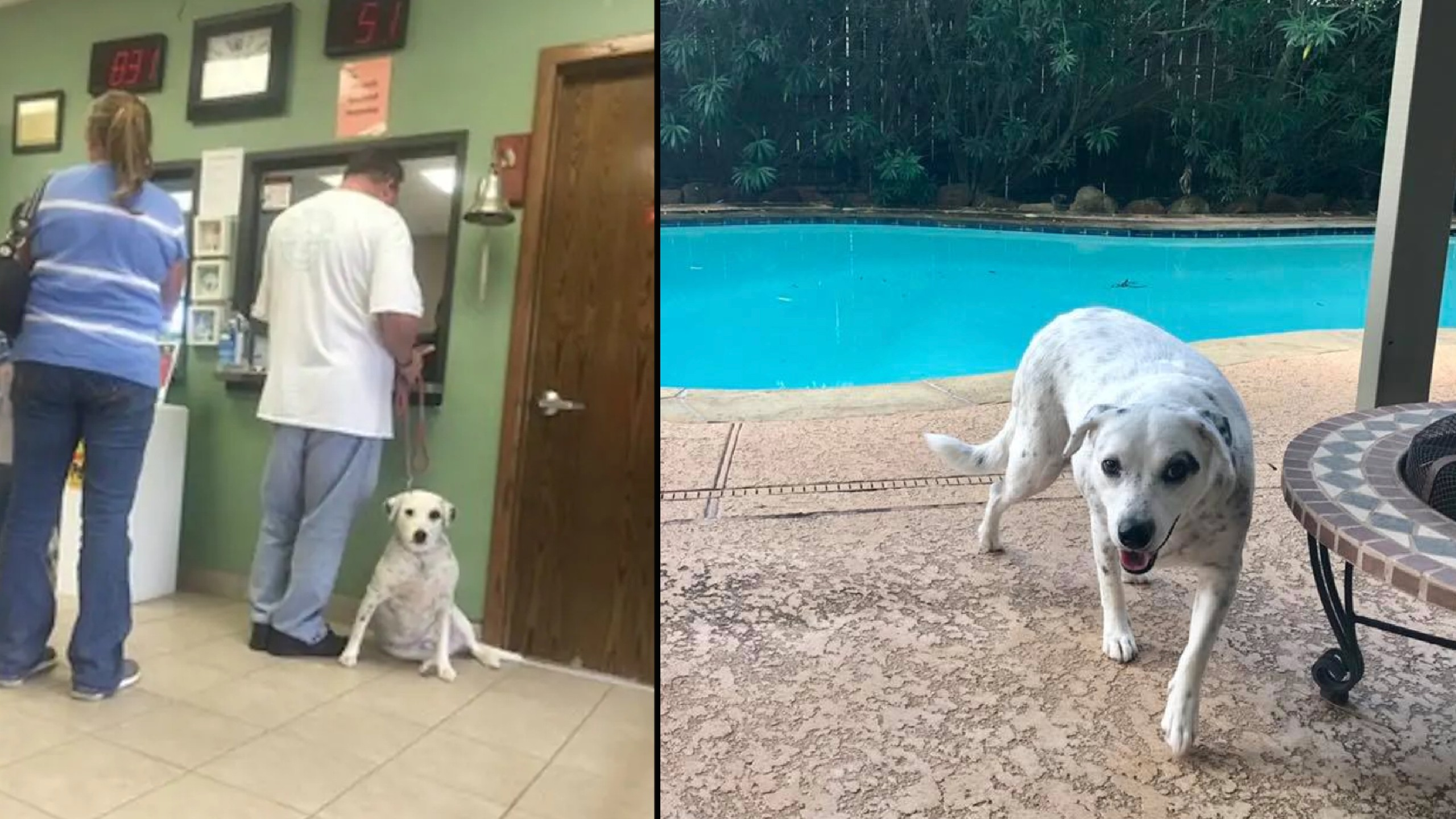 Dog surrendered for being too affectionate now has the perfect family