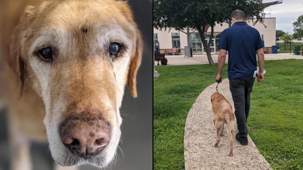 Man Dog Reunion